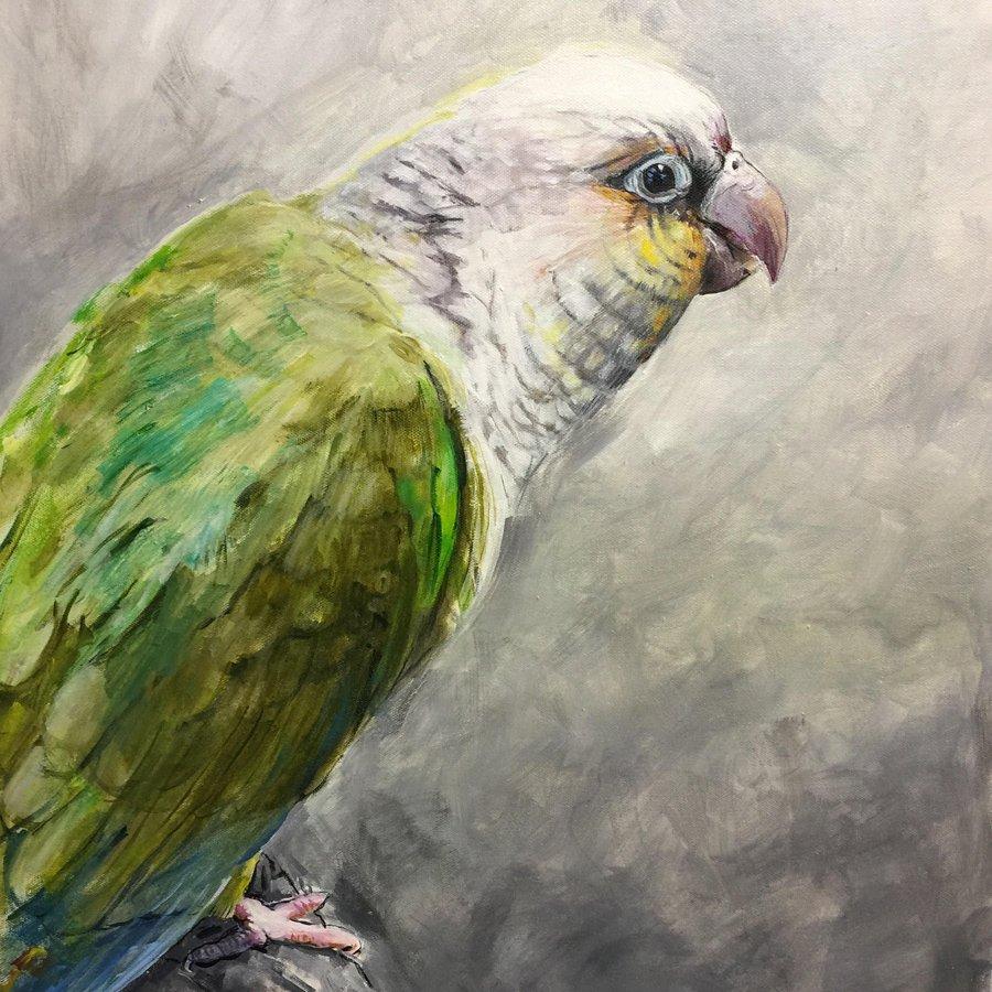 Ecuadorean-Parrot-Jule-Polkinghorne-6e9eae6eda07cf71e3ef8d7f013751fc