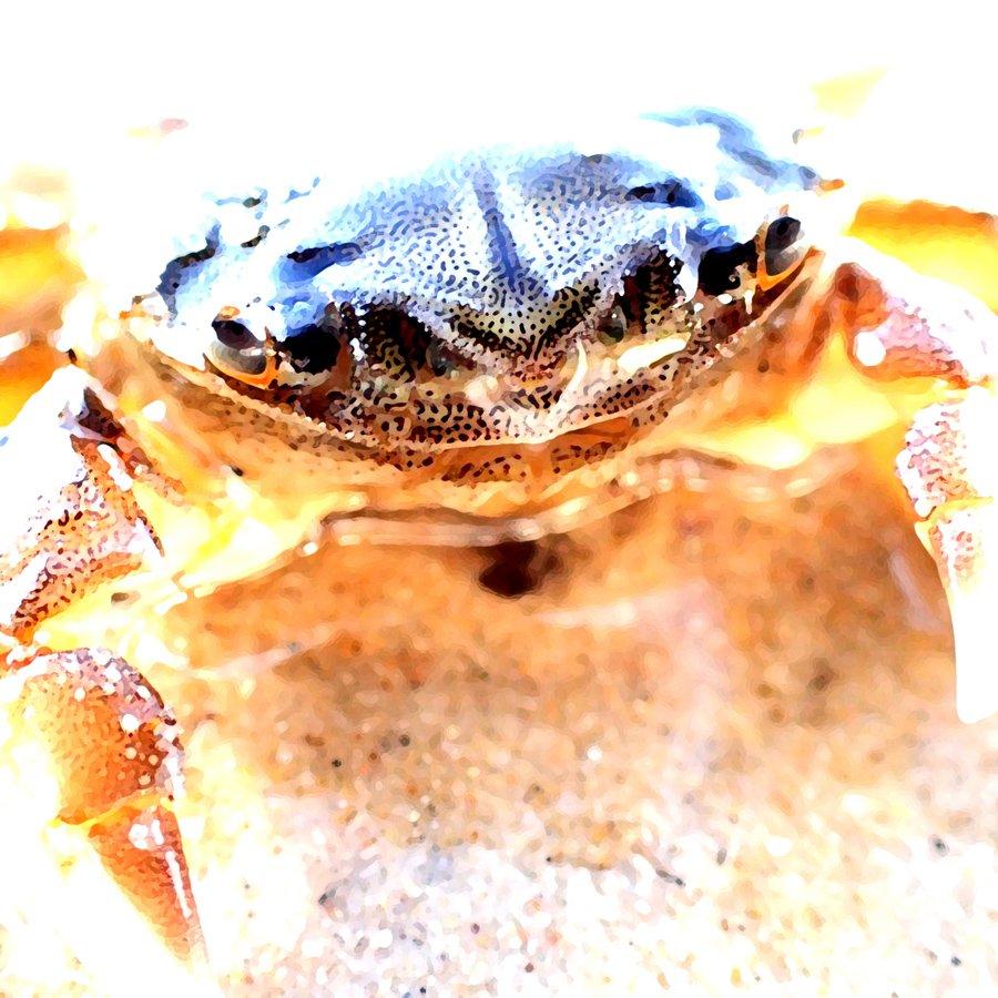 Steven_Hill_Crab